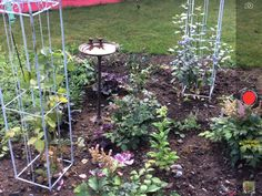 Outdoor Structures, Plants, Plant, Planting, Planets