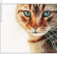 Kit point de croix  - Regard de chat - Lanarte