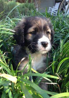 A Cute Dog <3