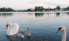 Die schönsten Ausflugsziele am Wiener Stadtrand - Teil 2 - 1000things.at Austria, Animals, Vacation Travel, Road Trip Destinations, Explore, City, Destinations, Nice Asses, Animales