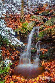 Beautiful Waterfalls in Autumn Little Rivulet, Okemo Mountain Resort, Vermont, USA Lower Lewis River Falls , Washington Black Forest Wate. Beautiful Waterfalls, Beautiful Landscapes, Photo Elephant, Beautiful World, Beautiful Places, Belleza Natural, Nature Pictures, Belle Photo, Pretty Pictures