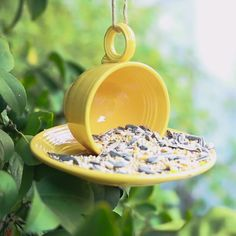 Here Is How To Create Your Own Teacup Bird Feeder | BuzzFeed