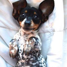 harlow-sage-indiana-reese-cute-dog-photos-8-605x605