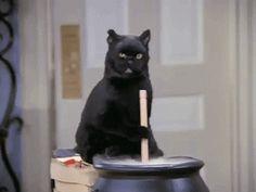 La Maldad de los Gatos Animales fer Gif