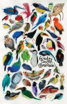 eatsleepdraw:  Birds of South America leah zobott | tumblr | cargo