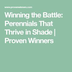 Winning the Battle: Perennials That Thrive in Shade | Proven Winners