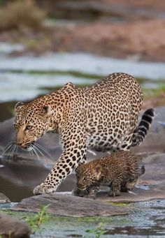 Momma and the cub strolling