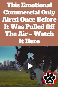 Though it only aired one time during Super Bowl XXXVI, many people never forgot seeing it. Should never have been removed. Animals And Pets, Funny Animals, Cute Animals, Beautiful Horses, Animals Beautiful, Budweiser Commercial, Air One, Clydesdale Horses, Funny Animal Pictures
