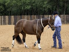 Exercise #5: Backing Steady Pressure Goal: To get the horse to back up by applying steady pressure with just two fingers on the lead rope. More about the exercise: https://www.downunderhorsemanship.com/Store/Product/MEDIA/D/252/