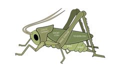Eating bugs might sound like something you'd do if you lost a bet. But a few companies have cropped up that are marketing insect powder as a nutritional supplement -  - try #edibleinsects and #cricketflour @ buggrub.com