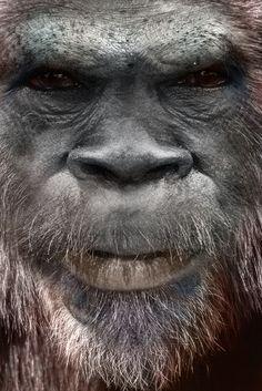 Bigfoot   Art   Face   SasquatchxSatanfudge