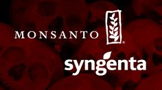 Monsanto seeks merger with Syngenta to control more than 35% of the world's seed supply