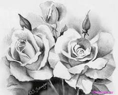 Coloring Pages Roses : Pencil drawing roses drawings drawings rose and