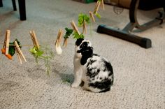 Bunny Logic 101: Creating stimulating, challenging fun toys to engage your bunny keep him happy! #easy #diy #rabbit