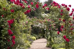 Enchanted English Rose Gardens