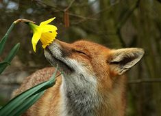 Stop and smell the roses, or tulips. :)