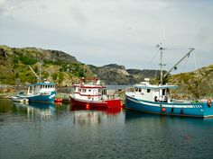 Brigus boats, NL Newfoundland, Whales, Boats, Canada, Photography, Collar Stays, Photograph, Whale, Ships