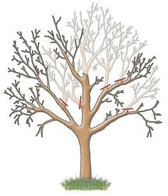 Simple Yet Elegant Modern Landscaping Design Tips – My Best Rock Landscaping Ideas Landscaping With Rocks, Modern Landscaping, Landscaping Plants, Front Yard Landscaping, Bonsai Art, Bonsai Plants, Pruning Fruit Trees, Trees To Plant, Apple Tree Care