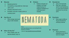 Nematode slide (Lara, Victoria, Bailie, and Kenzie) (they are TRIPLOBLASTIC)
