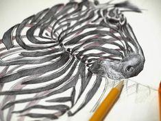 Sketch of ribbon zebra by Jaume Montserrat
