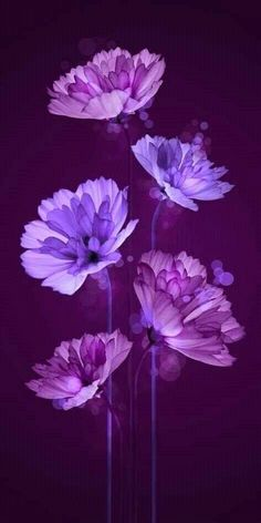 i Purple it : Purple Flowers aesthetic violet Flower Background Wallpaper, Purple Wallpaper, Butterfly Wallpaper, Purple Flower Background, Trendy Wallpaper, Background Patterns, Tumblr Backgrounds, Flower Backgrounds, Art Floral