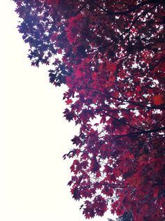 #nature #tree #flower #amzing #red #myphotoes
