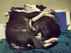 A photo of two shelter puppies cuddling went viral, as the story of the siblings -- one of whom is blind, and the other who guides his broth...