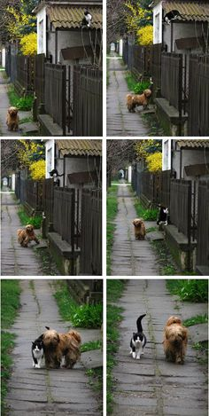 this is actually fun to watch.. but looking at that dog's dirty fur, i just feel sad :'(