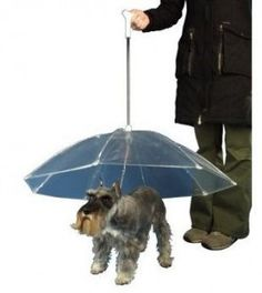 Oh this makes so much sense!  The stays dry and the human gets wet...as it should be. ;-)