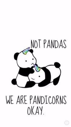 We are pandacorns not pandas Niedlicher Panda, Panda Love, Cute Panda, Panda Funny, Unicorn Quotes, Unicorn Art, Cute Unicorn, Unicorn Pics, Unicorn Drawing