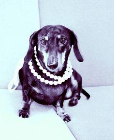 Ona. Pies, który zawsze czuł się damą. Dama, która zawsze wyglądała jak pies.
