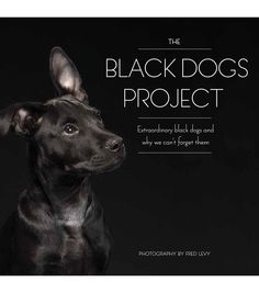 The Fred Levy Black Dogs Project is an extraordinary compilation of stunning photographs of ordinary black dogs, all captured by renowned photographer Fred Levy. Through these visuals, he has encapsul