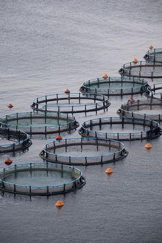 Fish farms, Chile