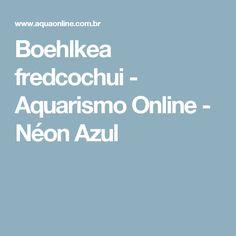 Boehlkea fredcochui - Aquarismo Online - Néon Azul