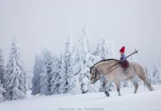 RIDING-THE-HORSE_the_christmas_wish