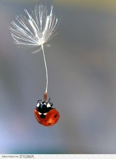 How brave a ladybug must be! Each drop of rain is big as she. Can you imagine what you'd do, if raindrops fell as big as you? (Aileen Fisher)