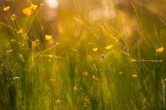 Photography-GeneralMay 26, 2015 summer dream By Nina Mingioni