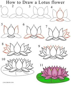 How To Draw Lotus Flower Step By Pictures