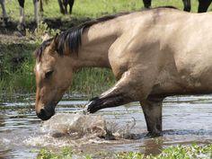 Horse Water, Horses, Animals, Animales, Animaux, Animal, Animais, Horse