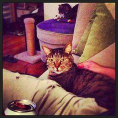 """Daddeh, iz dat te beeuhr dat iz named aftur me?"" #SimonAndStellaCats #Stella #Simon #cats #cat #kitty #kitties #kitteh #kittehs #gato #gatos #monkeybuns #furpig #neko #catsofinstagram #beer #Stella #StellaArtois"
