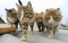 These are some serious looking kitties