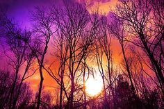 Abraham Hicks Bring passion back into your life , law Of Attraction – I Love Law of Attraction Sunset Photography, Image Photography, Purple Sunset, Bare Tree, Tree Silhouette, Sunset Pictures, Photo Tree, Flower Images, Walking In Nature