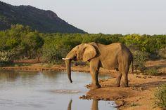 Ein Elefant fotografisch festgehalten. Hier ist Übung und Geduld gefragt. Die Wildlife-Fotografie bietet unzählige Motive. #elefant #wildlife_fotografie Wir haben einige hilfreiche Tipps zusammengefasst. http://www.fotos-fuers-leben.ch/fotokurs/naturfotografie/wildlife-fotografie/
