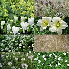 De mooiste borderplanten en -combinaties | MijnTuin.org Geranium Sanguineum, Geraniums, Garden Plants, White Flowers, Perennials, Gardens, Terrace, Snow White Pictures, Lawn And Garden