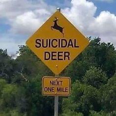Suicidal Deer