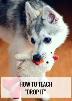 """Teach your dog the """"drop it"""" command without using force. THREE different ways! Pet Accessories, Dog Toys, Cat Toys, Pet Tricks"""