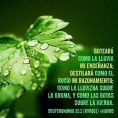 Deuteronomio 32:2Reina-Valera 1960 (RVR1960) 2Goteará como la…