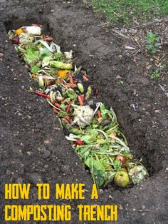What is Trench Composting? Just dig a hole and fill it with scraps!
