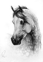 More equine art & inspiration www.pl Daugther of the Wind by NutLu (by deviantart) Horse Drawing Tutorial, Horse Pencil Drawing, Realistic Pencil Drawings, Horse Drawings, Art Drawings Sketches, Animal Drawings, Horse Sketch, Arabian Art, Horse Artwork