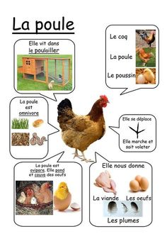 Poule - Animaux de la ferme animals silly animals animal mashups animal printables majestic animals animals and pets funny hilarious animal Montessori Activities, Educational Activities, Activities For Kids, Montessori Infant, Montessori Materials, French Teacher, Teaching French, French Education, Kids Education